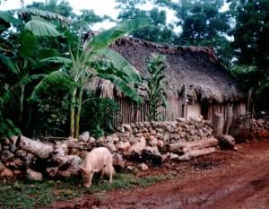 Maya-Haus in Quintana Rookl
